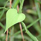 leafheart by Sheila McCrea