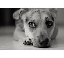 puppy's serious life Photographic Print