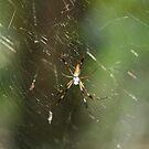 spider by Sheila McCrea