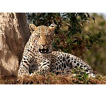 Leopard in waiting Photographic Print