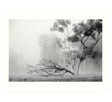 Misty Paddock Art Print