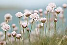 St. Ives Thrift by Evelyn Flint - Daydreaming Images