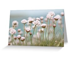 St. Ives Thrift Greeting Card