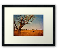 Cattle Country - Uralla, Northern Tablelands, NSW, Australia Framed Print