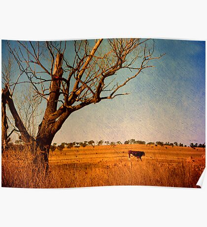 Cattle Country - Uralla, Northern Tablelands, NSW, Australia Poster