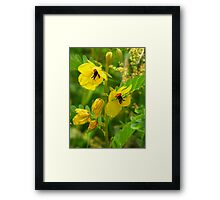 Partridge Pea Framed Print