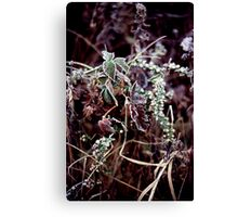 022107-45 FROST      Canvas Print