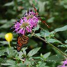 Butterfly house 1 by JenniferJW