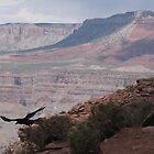 Soaring Raven by cherylsnake