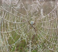 Ugly spider, beautiful web by cherylsnake
