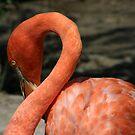 Flamingo Neckline by Len Bomba