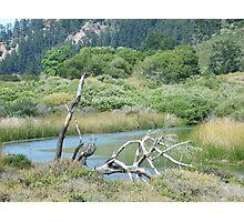 Roosevelt Marsh- Big Basin Photographic Print