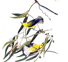 Vintage cute bright yellow and black birds by Maria Fernandes