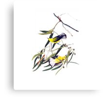 Vintage cute bright yellow and black birds Canvas Print
