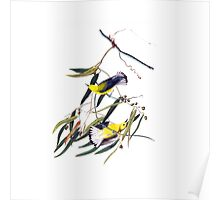 Vintage cute bright yellow and black birds Poster