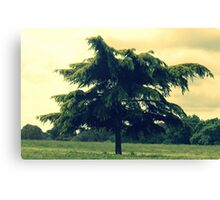 A fir tree Canvas Print