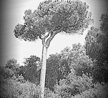 Pine marine n ° 1 by orsinico