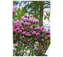 Blooming Trees #2 Poster