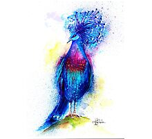 """Blue Crowned Pigeon"" Photographic Print"