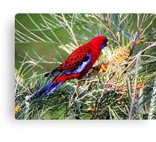 lunchtime! Canvas Print