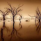 Tenindewa Road - III by Pene Stevens