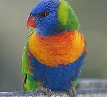 True Colours by Rochelle Buckley