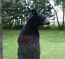 Mr. Bear...Peeping Tom by MaeBelle