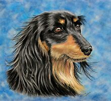 'Marcus' - Long Haired Dachshund  by Michelle Wrighton