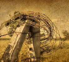Fence Post, Old Wire by Delany Dean