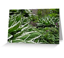 Hosta Invasion Greeting Card