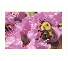 Bumble Bee Wings Art Print