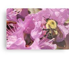 Bumble Bee Wings Metal Print