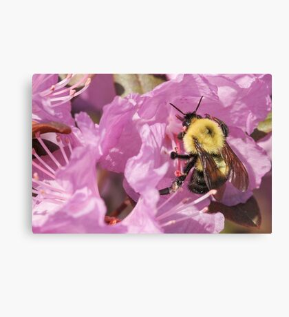 Bumble Bee Wings Canvas Print