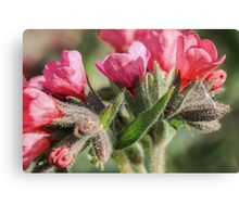 Fuzzy Flowers Canvas Print
