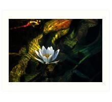 Okavango Lily Art Print