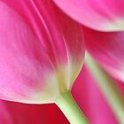 Pink by Ree  Reid