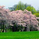 Springtime in New York by Karen Checca