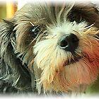 puppy dog eyes by ariel154