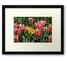 Yellow Tulip Among Friends Framed Print