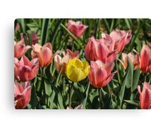 Yellow Tulip Among Friends Canvas Print