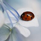 Ladybugs etc. by Ellen van Deelen