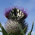 Butterfly and Thistle by g369
