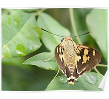 Splendid Ochre Butterfly - Patterns Poster