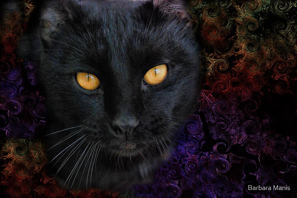 Black Cat by Barbara Manis