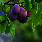 Showering Plums by Jessica Hardin
