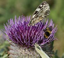 Bugs and Thistle by g369