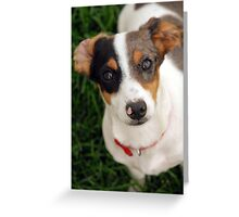 Panini the Puppy  Greeting Card