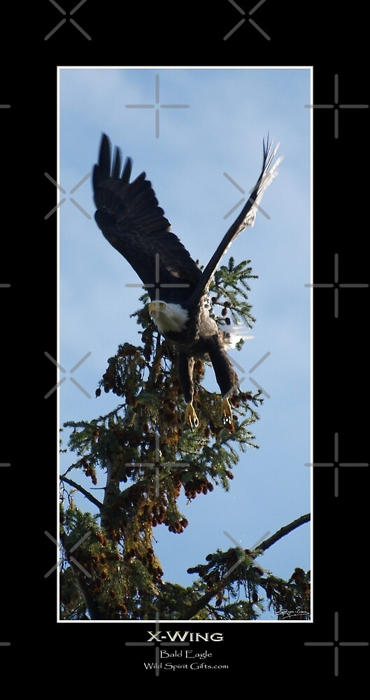 X-Wing (Bald Eagle) by Skye Ryan-Evans