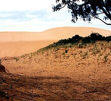 Pink Sand Dunes by Graeme  Hyde