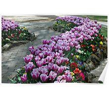 Purple Tulip Path Poster